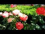 «Розы» под музыку  Релаксация при свечах -  Саксофон, романтик. Picrolla